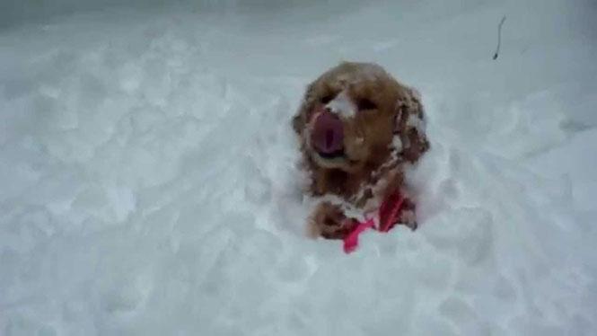 Σκύλοι ανακαλύπτουν το χιόνι