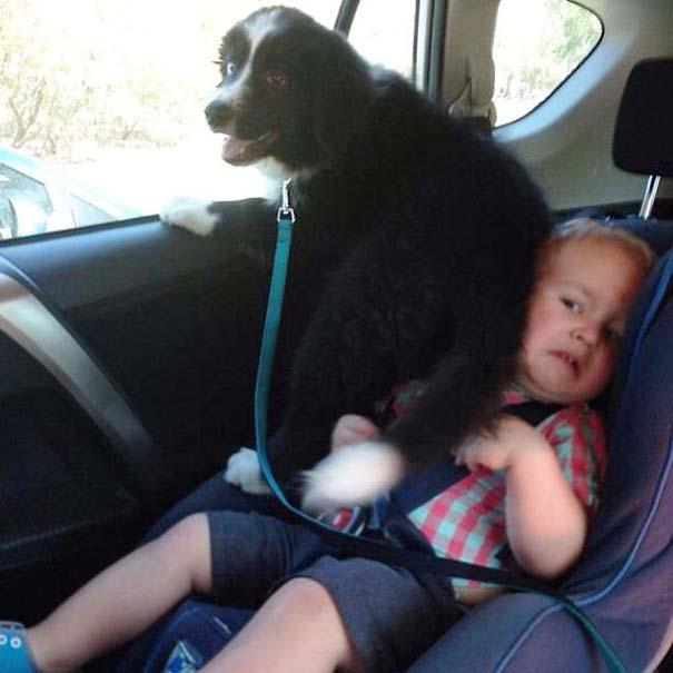 Σκύλοι που λατρεύουν να εισβάλλουν στον προσωπικό μας χώρο (5)