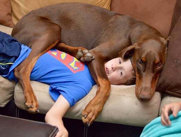 Σκύλοι που λατρεύουν να εισβάλλουν στον προσωπικό μας χώρο (6)