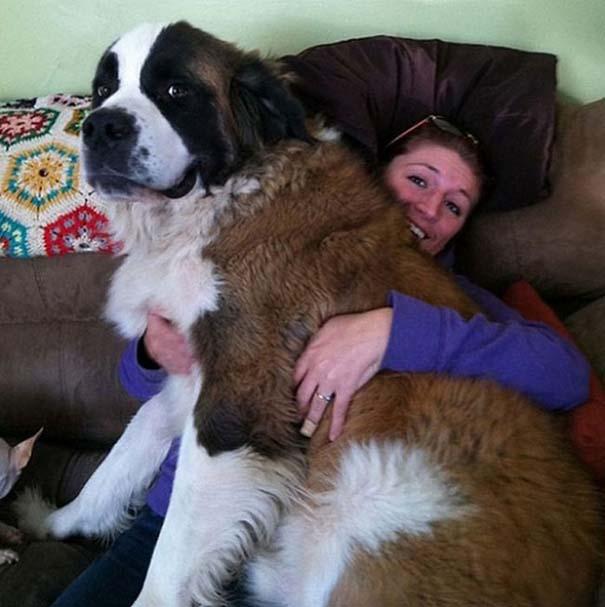 Σκύλοι που λατρεύουν να εισβάλλουν στον προσωπικό μας χώρο (8)