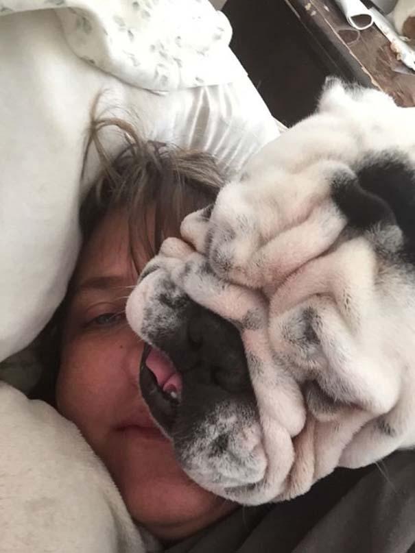 Σκύλοι που λατρεύουν να εισβάλλουν στον προσωπικό μας χώρο (9)
