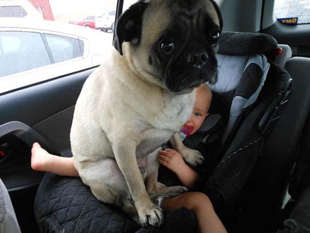 Σκύλοι που λατρεύουν να εισβάλλουν στον προσωπικό μας χώρο (11)