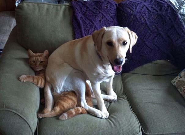 Σκύλοι που λατρεύουν να εισβάλλουν στον προσωπικό μας χώρο (13)