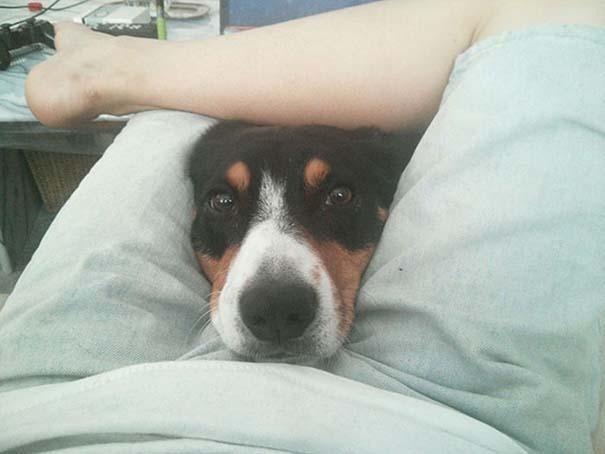 Σκύλοι που λατρεύουν να εισβάλλουν στον προσωπικό μας χώρο (25)