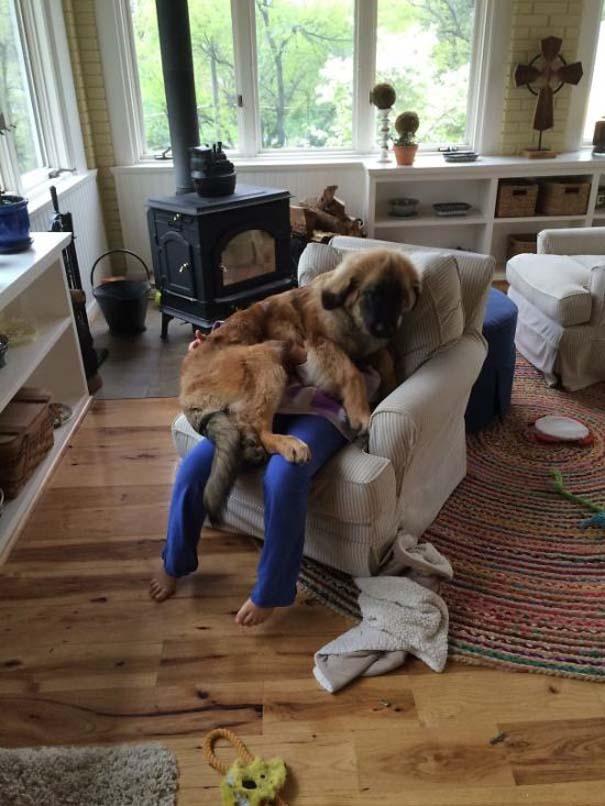 Σκύλοι που λατρεύουν να εισβάλλουν στον προσωπικό μας χώρο (17)