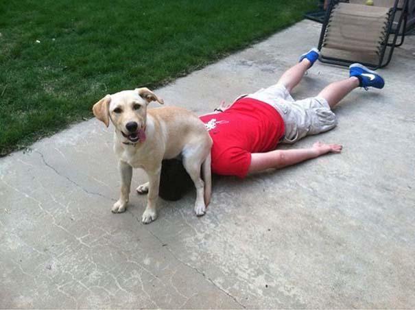 Σκύλοι που λατρεύουν να εισβάλλουν στον προσωπικό μας χώρο (24)