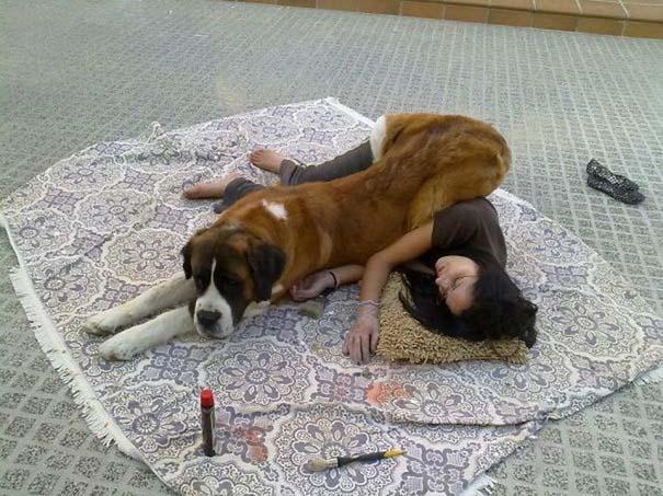 Σκύλοι που λατρεύουν να εισβάλλουν στον προσωπικό μας χώρο (22)