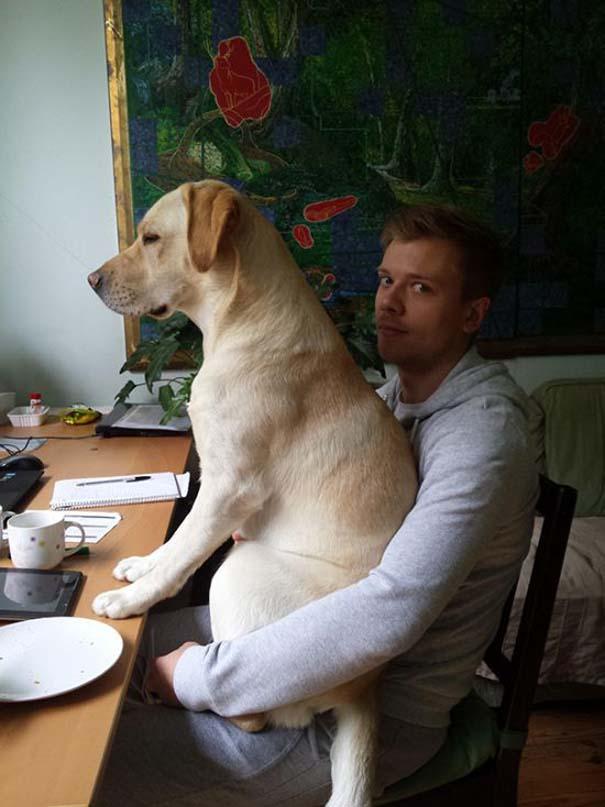 Σκύλοι που λατρεύουν να εισβάλλουν στον προσωπικό μας χώρο (23)