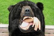 Υπνόσακος αρκούδα (5)