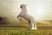 Ζώα που βγήκαν από το Photoshop (7)