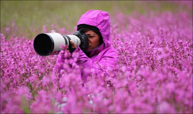 Φωτογράφοι άγριας φύσης επί το έργον (3)