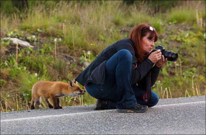 Φωτογράφοι άγριας φύσης επί το έργον (7)