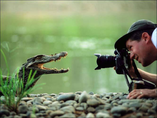 Φωτογράφοι άγριας φύσης επί το έργον (8)