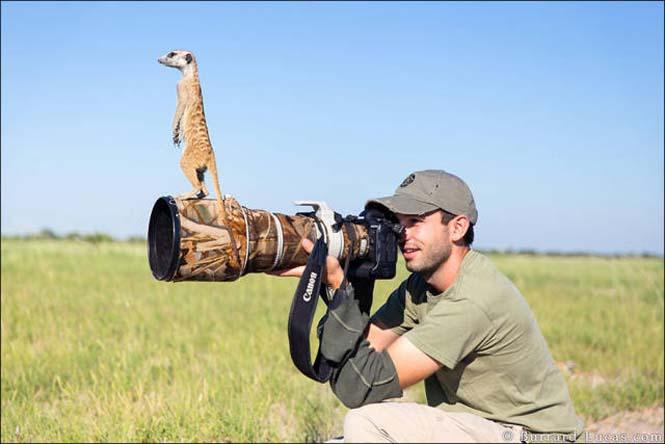 Φωτογράφοι άγριας φύσης επί το έργον (12)