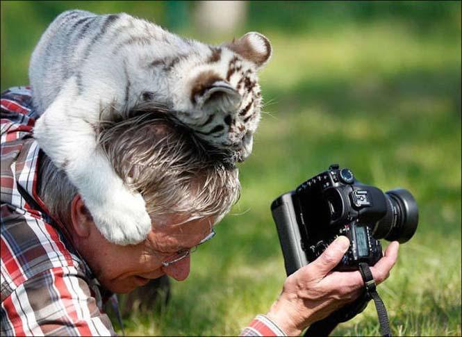 Φωτογράφοι άγριας φύσης επί το έργον (13)