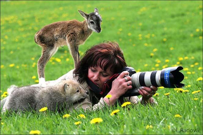 Φωτογράφοι άγριας φύσης επί το έργον (14)