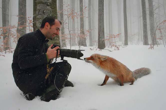 Φωτογράφοι άγριας φύσης επί το έργον (17)