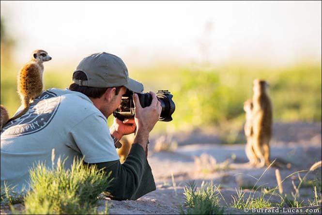 Φωτογράφοι άγριας φύσης επί το έργον (23)