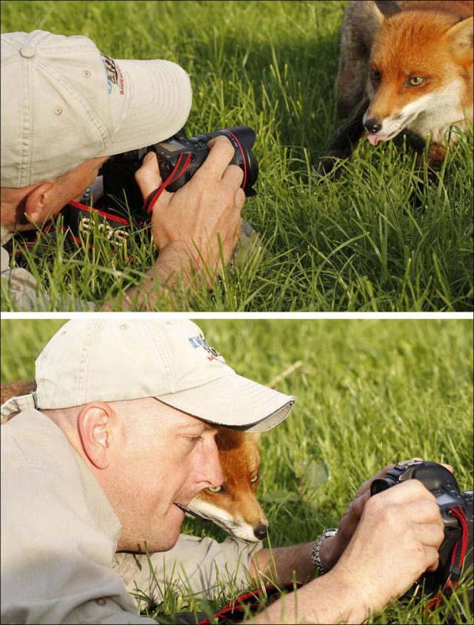 Φωτογράφοι άγριας φύσης επί το έργον (27)