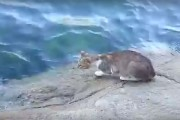 Γάτα ψαρεύει στην θάλασσα