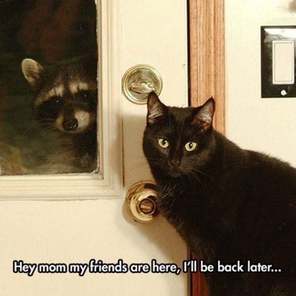 Γάτες που... κάνουν τα δικά τους! #23 (2)