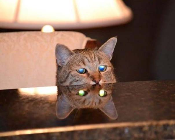 Γάτες που... κάνουν τα δικά τους! #23 (3)