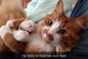 Γάτες που... κάνουν τα δικά τους! #23 (5)