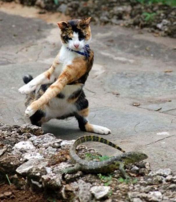 Γάτες που... κάνουν τα δικά τους! #23 (6)