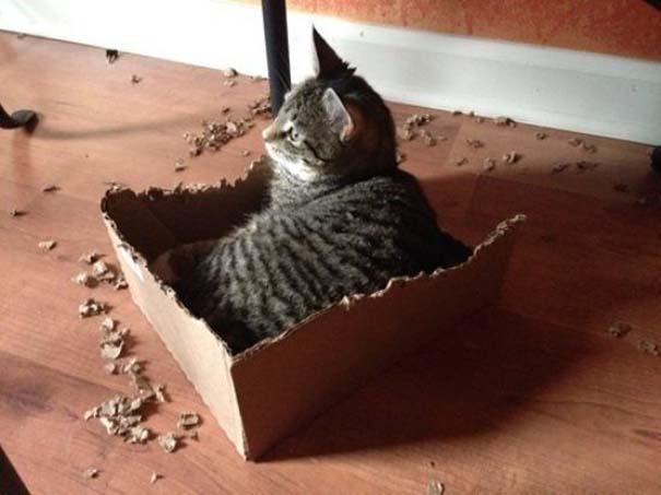 Γάτες που... κάνουν τα δικά τους! #23 (7)