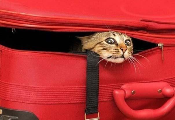Γάτες που... κάνουν τα δικά τους! #23 (9)