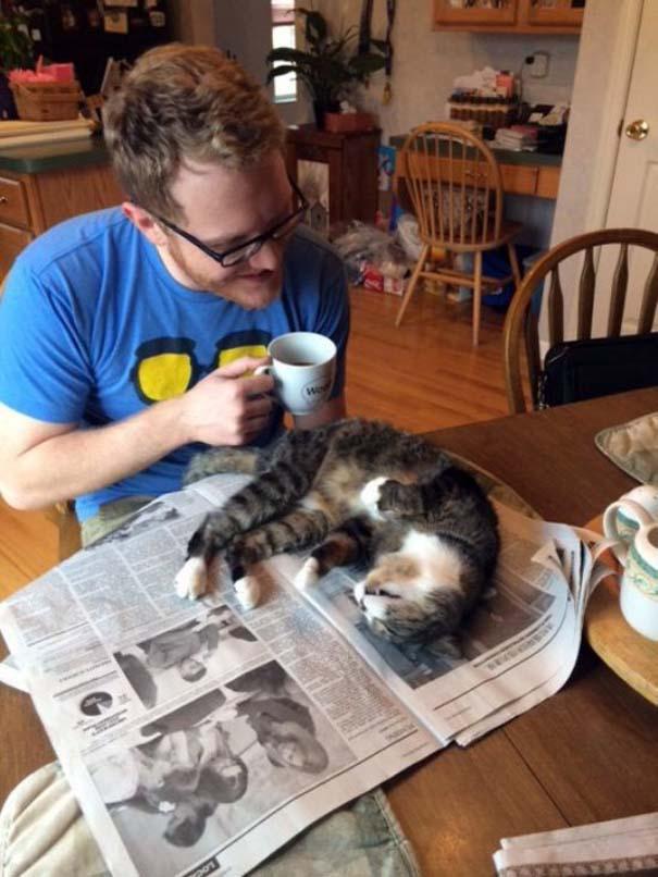 Γάτες που... κάνουν τα δικά τους! #23 (10)