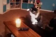 Γάτες εναντίον κεριών