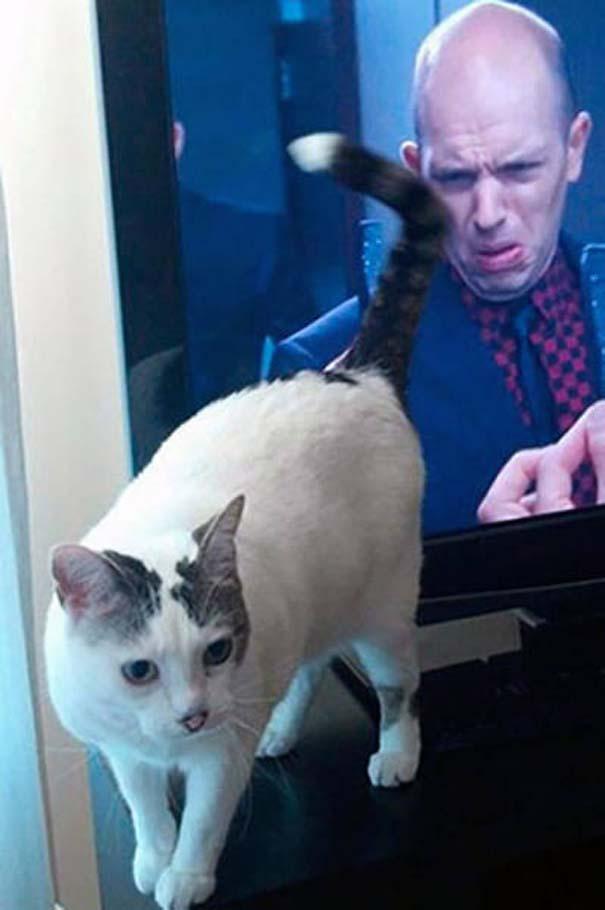 Γάτες που φωτογραφήθηκαν την κατάλληλη στιγμή #3 (1)