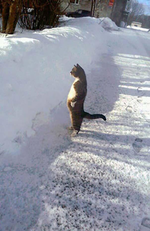 Γάτες που φωτογραφήθηκαν την κατάλληλη στιγμή #3 (2)