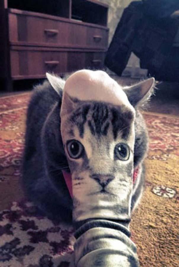Γάτες που φωτογραφήθηκαν την κατάλληλη στιγμή #3 (4)