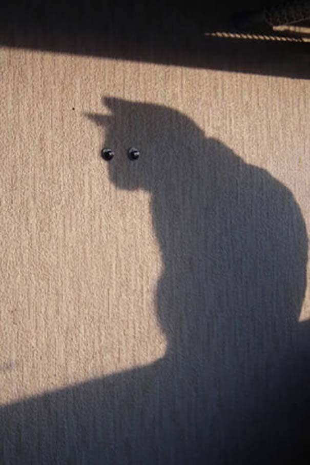 Γάτες που φωτογραφήθηκαν την κατάλληλη στιγμή #3 (5)