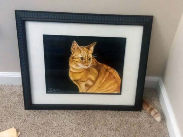Γάτες που φωτογραφήθηκαν την κατάλληλη στιγμή #3 (7)