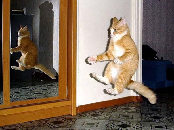 Γάτες που φωτογραφήθηκαν την κατάλληλη στιγμή #3 (8)
