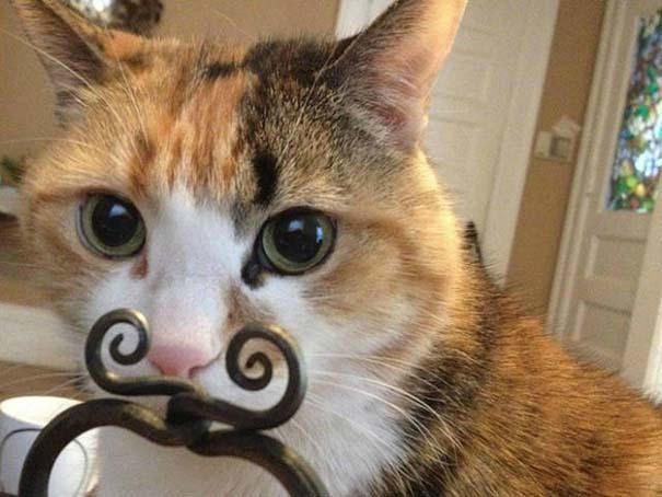 Γάτες που φωτογραφήθηκαν την κατάλληλη στιγμή #3 (11)