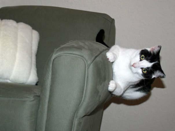 Γάτες που φωτογραφήθηκαν την κατάλληλη στιγμή #3 (13)