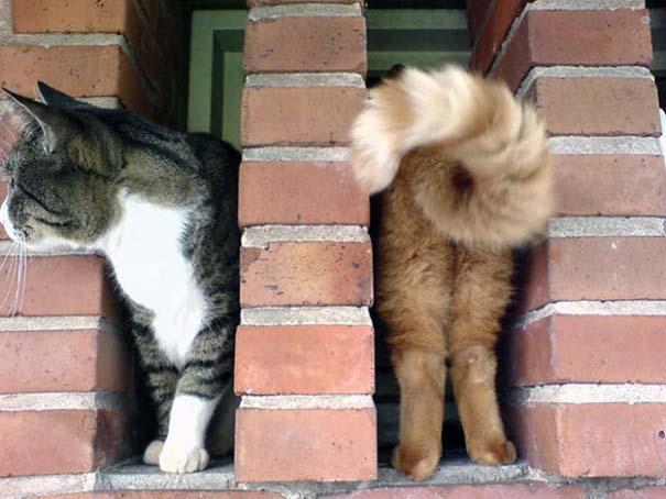 Γάτες που φωτογραφήθηκαν την κατάλληλη στιγμή #3 (14)