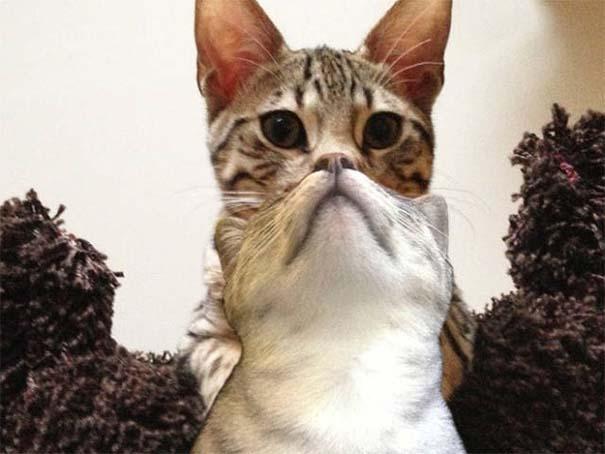 Γάτες που φωτογραφήθηκαν την κατάλληλη στιγμή #3 (15)