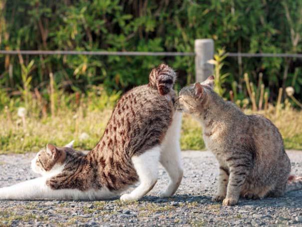 Γάτες που φωτογραφήθηκαν την κατάλληλη στιγμή #3 (19)