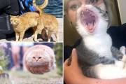 Γάτες που φωτογραφήθηκαν την κατάλληλη στιγμή #3 (20)