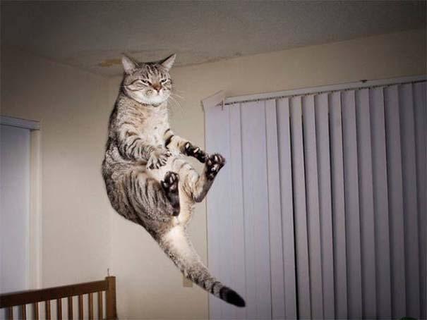 Γάτες που φωτογραφήθηκαν την κατάλληλη στιγμή #3 (21)