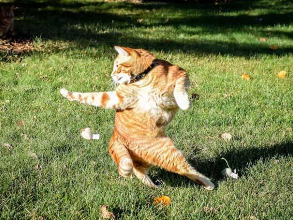 Γάτες που φωτογραφήθηκαν την κατάλληλη στιγμή #3 (22)