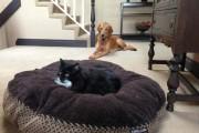 Γάτες που έκαναν κατάληψη στο κρεβάτι του σκύλου (12)