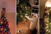 Γάτες που «βοήθησαν» στο στόλισμα του χριστουγεννιάτικου δένδρου