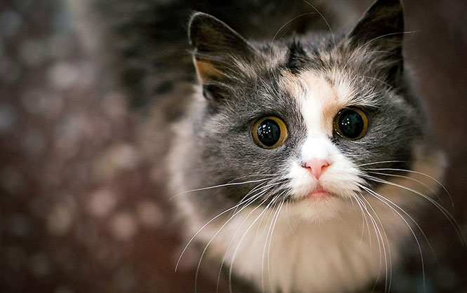 Γάτες υποδέχονται τους ιδιοκτήτες τους μετά από πολύ καιρό