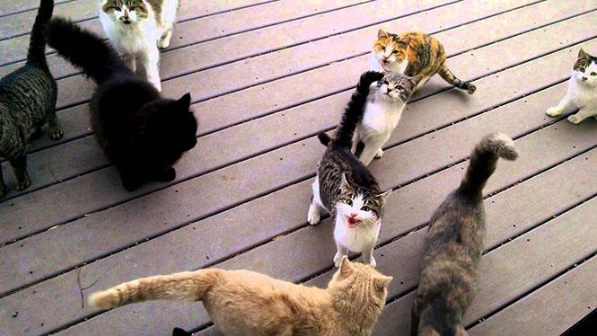 Πως ακούγεται ο ήχος αμέτρητων γατών που περιμένουν να τις ταΐσεις μόλις ανοίξεις την πόρτα σου
